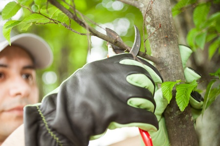 Tree Pruning one branch at a time