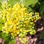 Flowering Shrubs That Like Shade