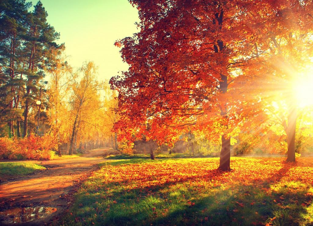 Red Oak Tree in Sunlight