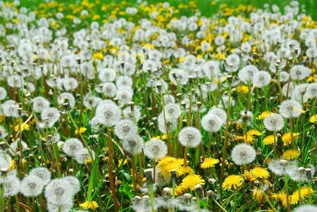 How to get rid of weeds from the flower beds