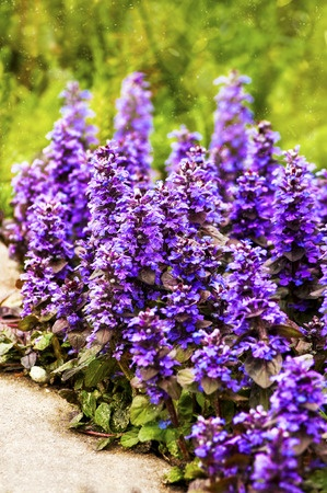 Best Inexpensive Ground Cover