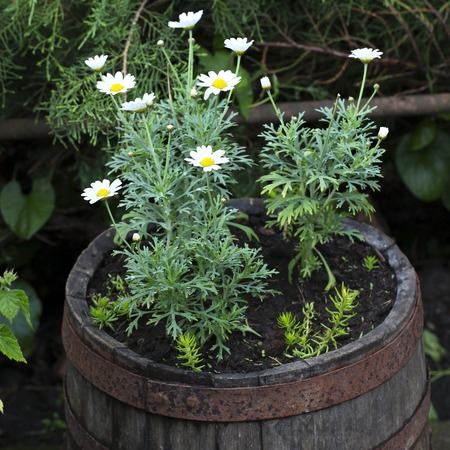 Frugal Gardening Containers